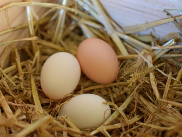 Eitjes van onze kippen